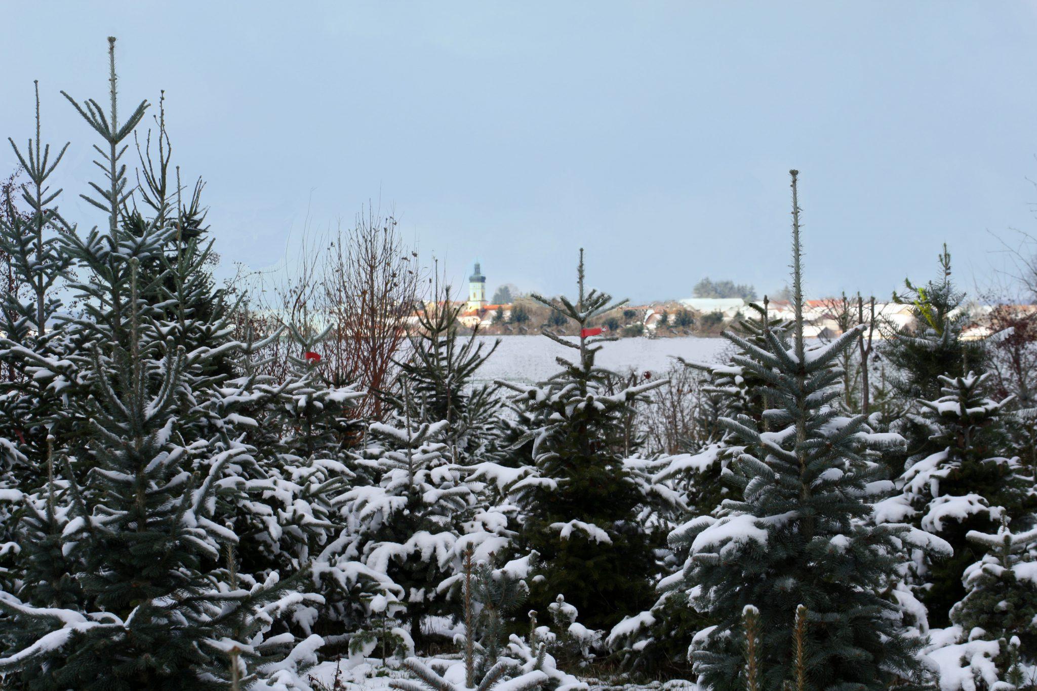 Titelbild mit Schnee mit Paulush_bearb3